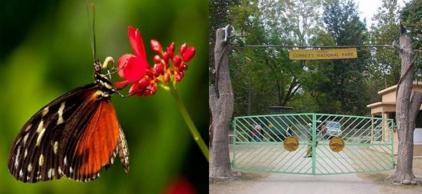 कॉर्बेट पार्क में बनने जा रही है एक अलग दुनिया,पर्यटकों को आकर्षित करेंगी सैंकड़ों प्रजातियों की तितलियां