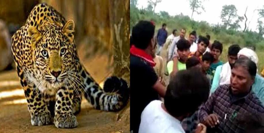 गंगोलीहाट: ढाई साल की बेटी को मां की गोद से छीन ले गया तेंदुआ, दहशत का माहौल