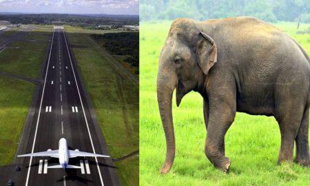 बाउंड्री तोड़कर देहरादून एयरपोर्ट में घुसा हाथी और फिर रनवे पर दौड़ने लगा